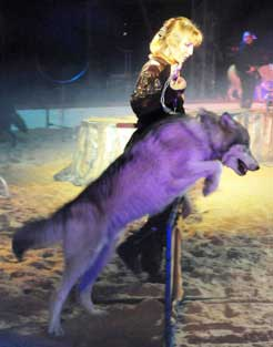 Spectacle animalier Les Loups