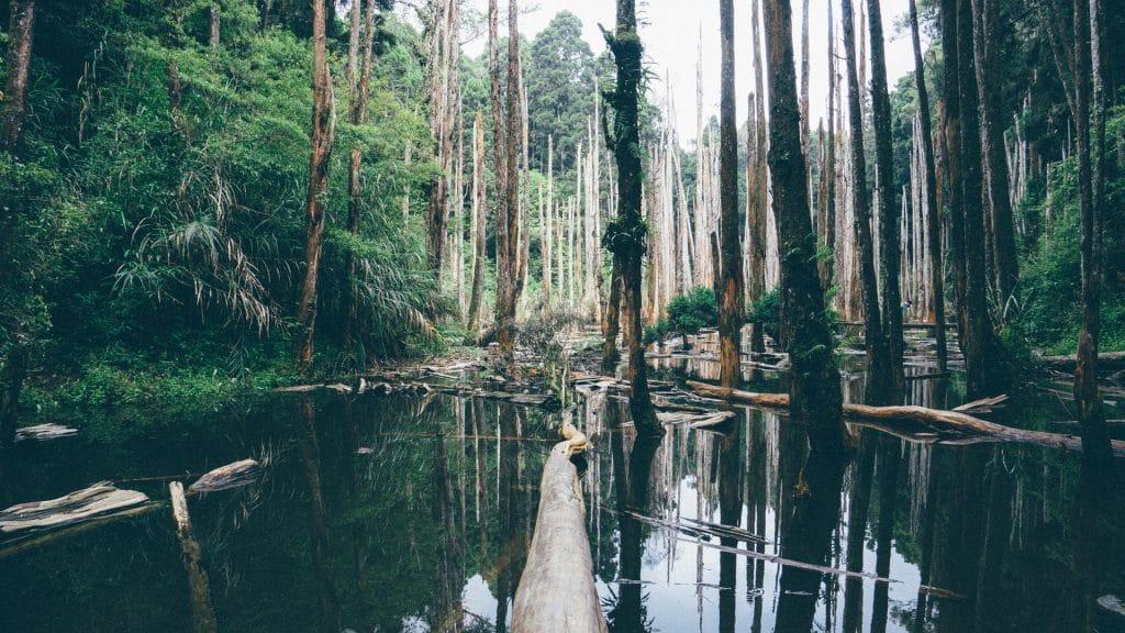 Everglades, Floride