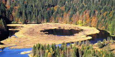 Tourbière au lac du Lispach à la Bresse