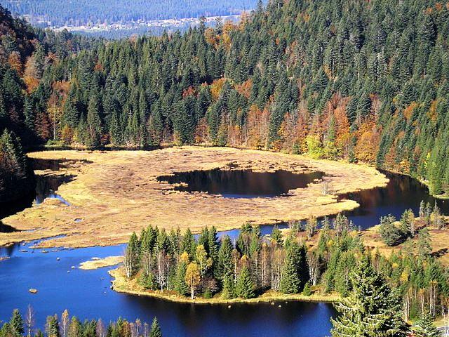 Tourbière du lac des Vosges au Lispach à la Bresse