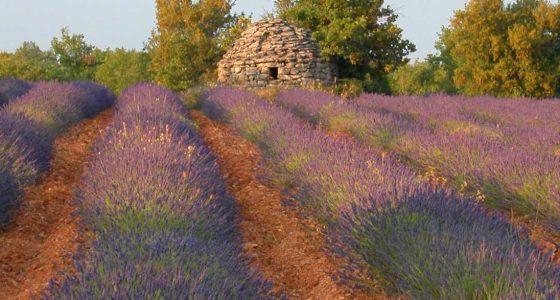 Hôtel face à un Champ de lavande Haute Provence