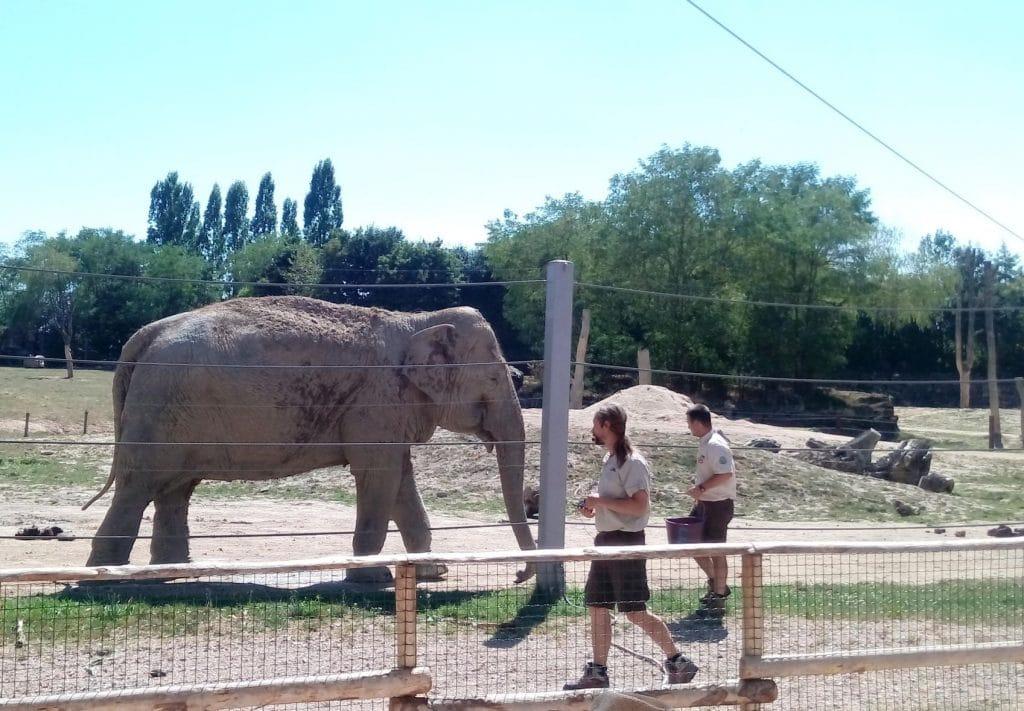Nourrissage des éléphants