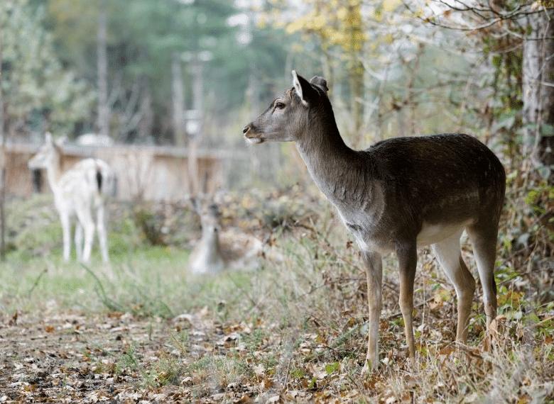 Cœur animalier Center Parc