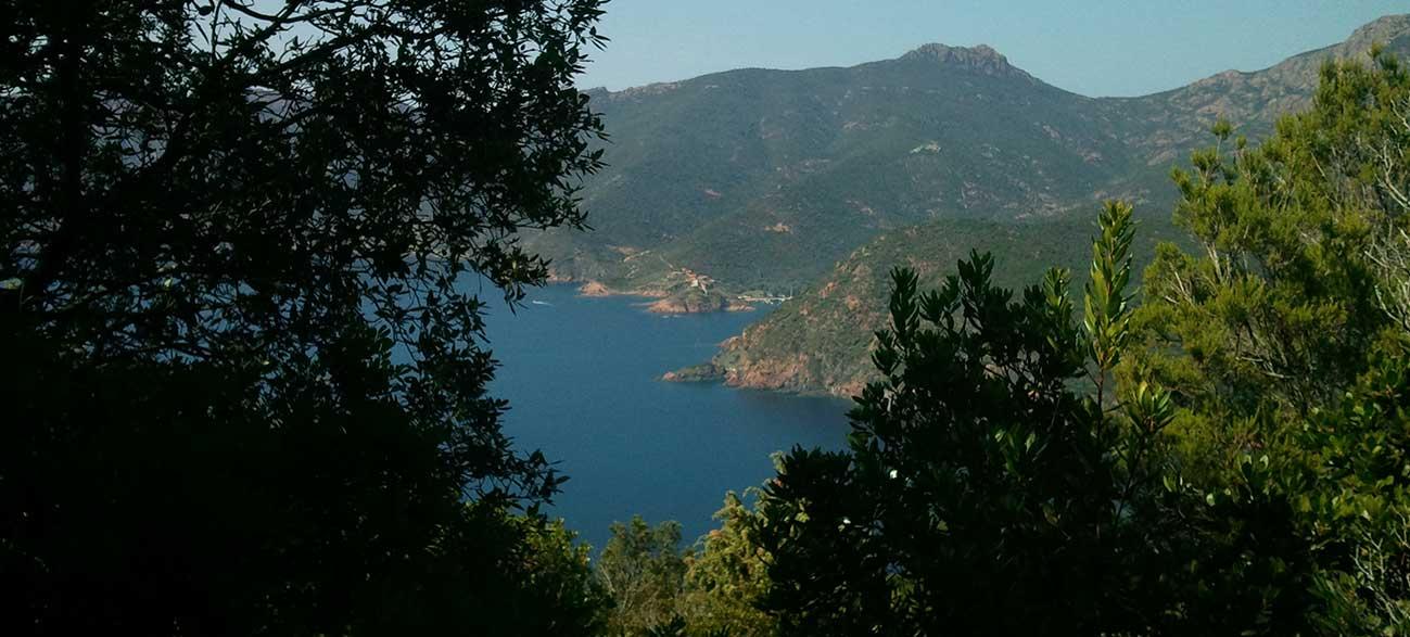 Maquis en Corse