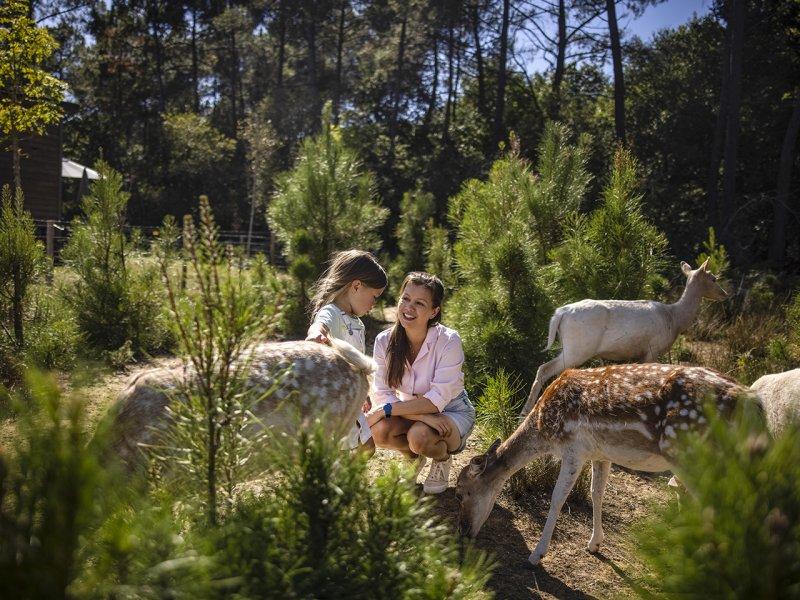 Experience avec les daims au bois aux daims center parcs